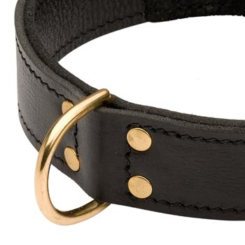 Brass D-ring Stitched to Leather Boxer Collar