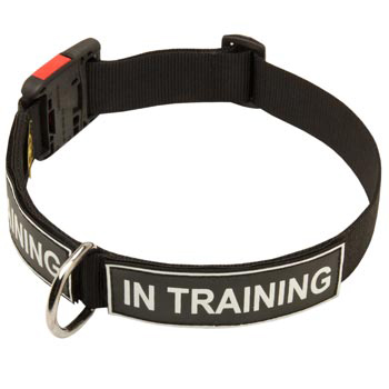 Nylon Boxer Collar With ID Patches
