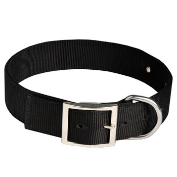 Boxer Training Collar with ID Tag