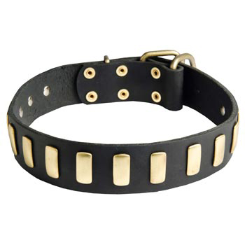 Boxer Collar Leather with Brass Hardware