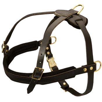 Leather Boxer Harness for Dog Off Leash Training