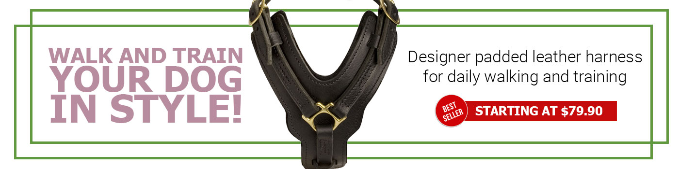 Padded Leather Boxer Harness for Agitation Training